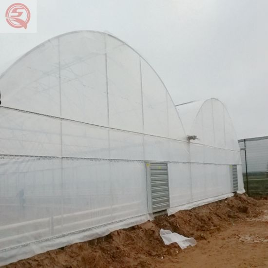 Agriculture Productive Ready Made Plastic Film Tomato/Cucumber/Strawberry/Garden Grow Tent Greenhouse