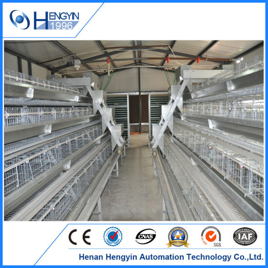 Layer Poultry Farming Cost