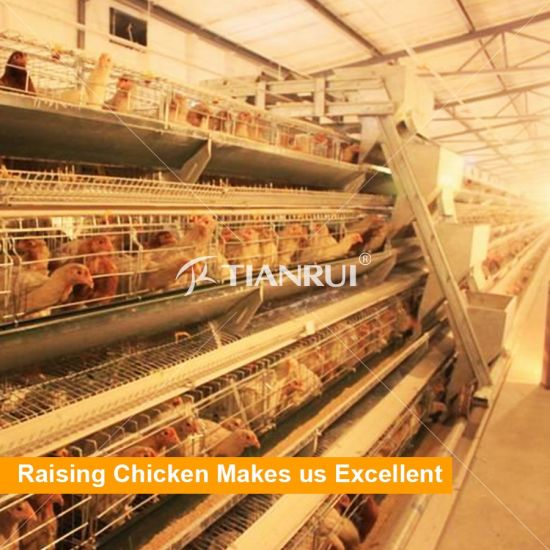 A Type 3 Tiers Layer Cage for 10000 Birds for laying hens cage chicken house