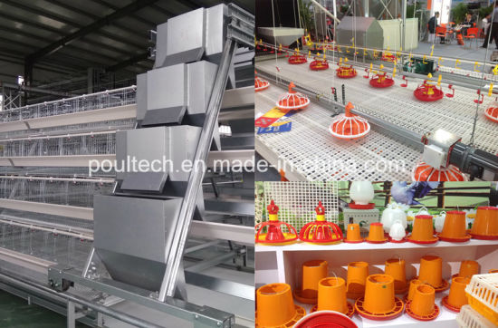 African Hot Sale Poultry Farm Equipment Chicken Battery Cages pictures & photos