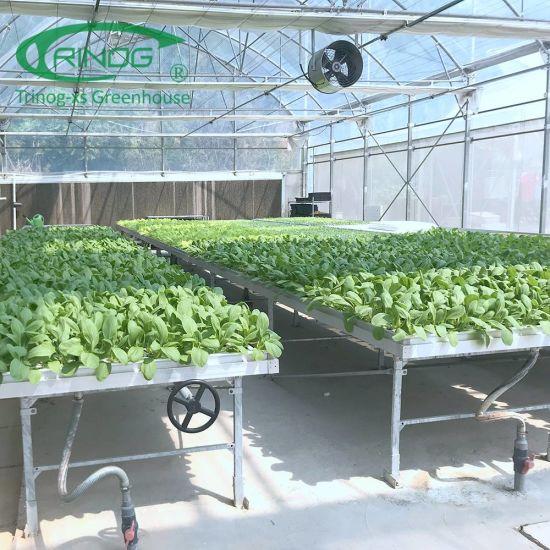 Indoor farming vertical DFT Nft Hydroponics System for salad lettuce