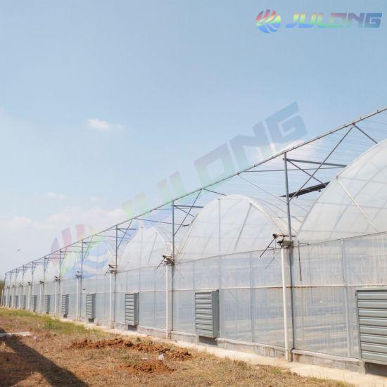Multi Span Plastic Film Greenhouse Soilless Planting for Sale