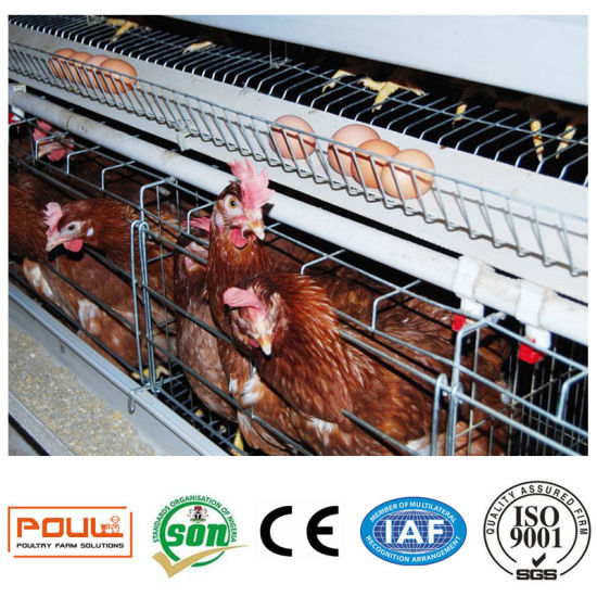 Best Price Poultry Farm Egg Laying Hen Chicken Cages 96 Birds or 128 Birds  Per Set