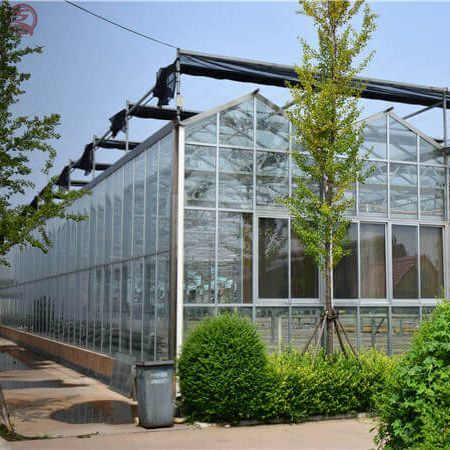 Venlo Type Farming Lettuce Vegetables Glass Green House Hydroponic with Ventilation System