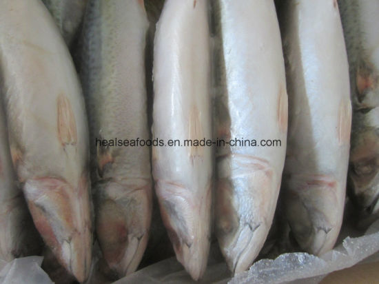 200-300 Land Frozen Pacific Mackerel Fish pictures & photos
