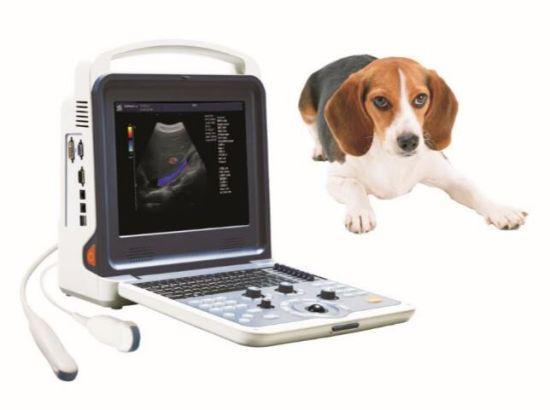 Hand Carried Color Doppler Vetrinary Ultrasound Scanner