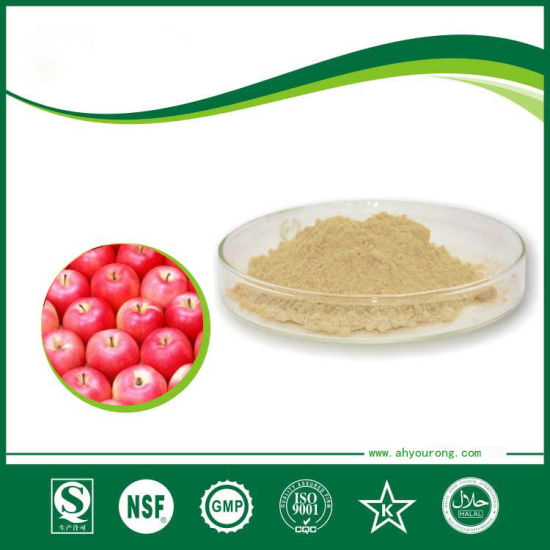 Food Grade Apple Powder Extract Apple Polyphenol 50 % pictures & photos