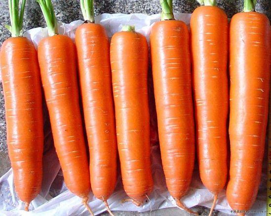 Premium Fresh Carrot Organic Carrot From China