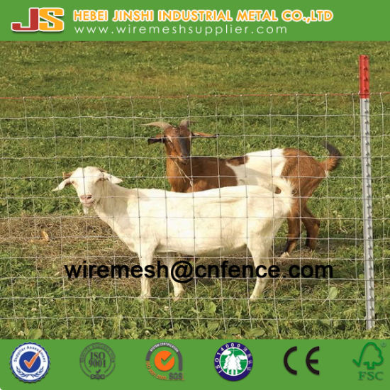 Galvanized Cattle Fence and Hinge Joint Fence Fixed Knot Field Fence Mesh for Animals pictures & photos