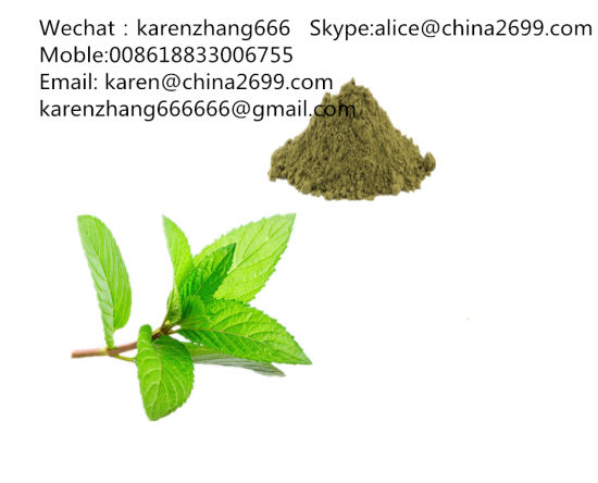 Free Sample Peppermint Extract/Peppermint Extract Powder/Young Mint pictures & photos