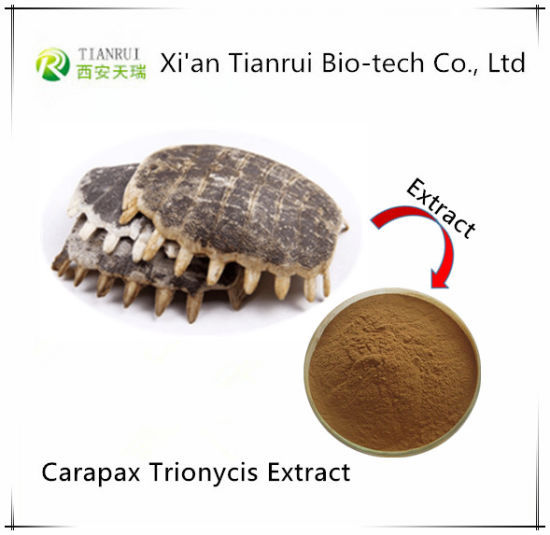 Factory Natural Carapax Trionycis Extract Powder with 10: 1