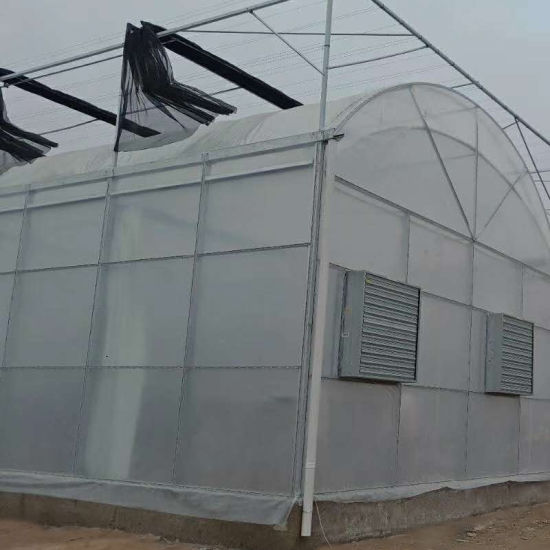 Multi-Span Industrial Agricultural Greenhouses Type and Plastic Coated