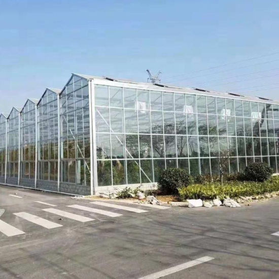Vegetable Glass Greenhouse for Agriculture