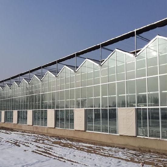 Commerical Venlo Glass Cover Greenhouse for Tomato
