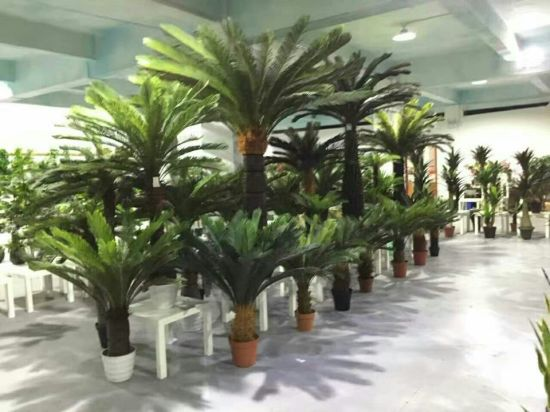 Artificial Plants and Flowers of Cycas Gu-SL5093403 pictures & photos