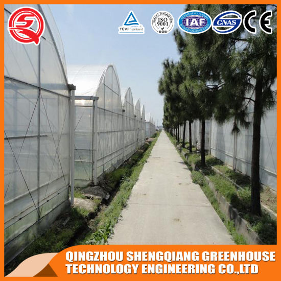 Agriculture Productive Modular Tropical Plastic Film Garden Greenhouse for Sale