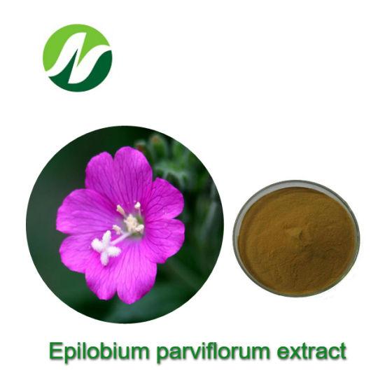 High Standard 1-5% Polyphenols Epilobium Parviflorum Extract