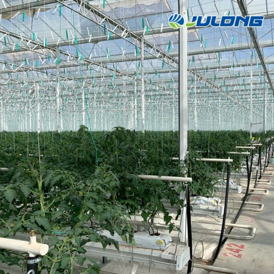 Agricultural Double Layer Hollow Polycarbonate Greenhouse for Hydroponic System Vegetable Tomato/Cucumber/Eggplant/Pepper/Strawberry/Flower/Fruits