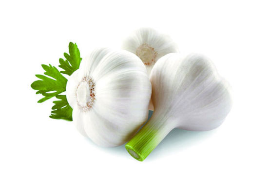 Wholesale Fresh Pure White Garlic/Normal White Garlic to Middle-East Market