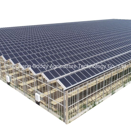 Metal Structure Frame Multi-Span Large Sunshine Sheet PC Board Agriculture Polycarbonate Greenhouse with Hydroponics