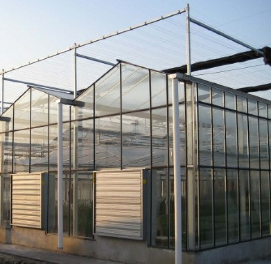 Agriculture Single Span Multi Span Glass Greenhouses for Planting Vegetables