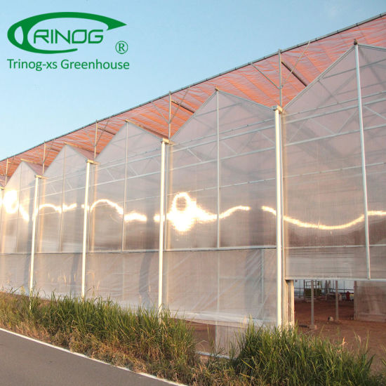 Commercial used hydroponics tomato PC sheet greenhouses for Japan