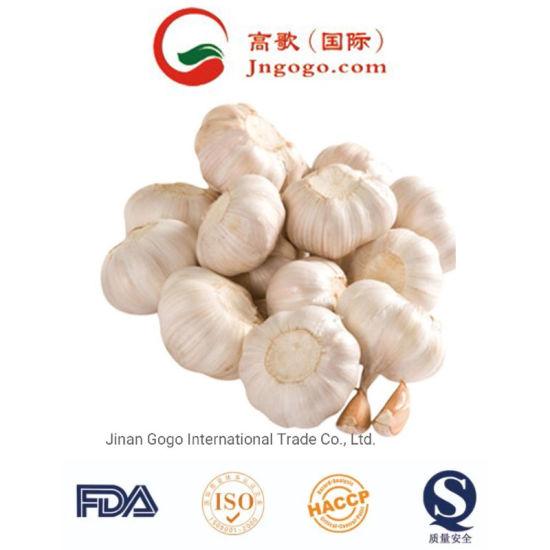 New Crop Fresh Chinese Jinxiang Normal White Garlic Supplier