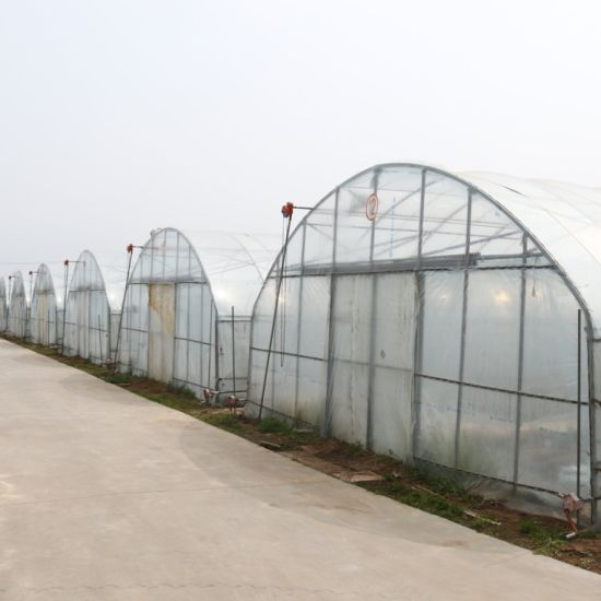 Double Layer Plastic Arch Pipes Greenhouse for Tomato Planting