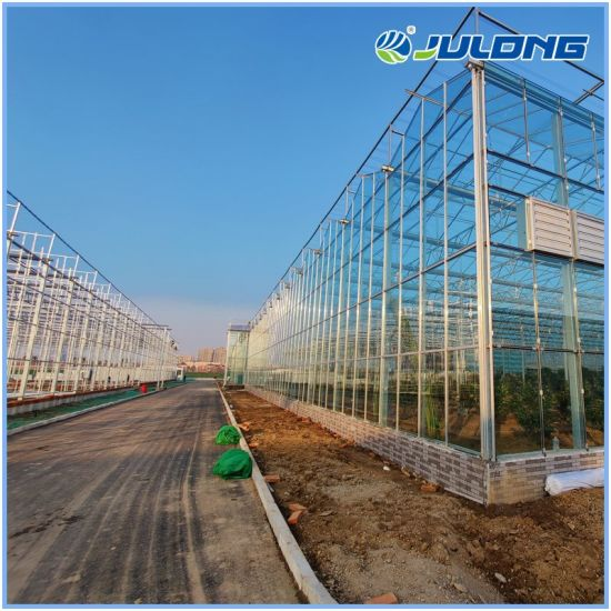 Multi Span Venlo Glass Greenhouse Agricultural Green House with Hydroponic Systems