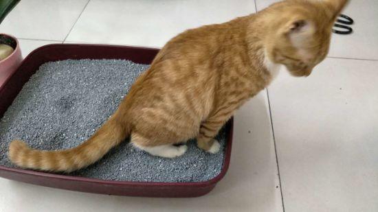 china odor control bentonite cat sand black color china cat litter