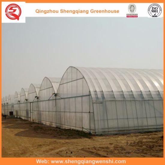 Multi Span Polyethylene Greenhouse Hydroponics System for Vegetables/Flowers/Fruit