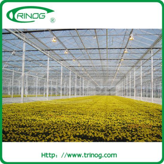 Multi-span Venlo glass greenhouse for flowers