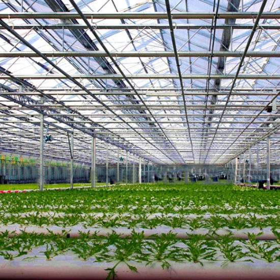 Venlo Multi-Span Flower Glass Greenhouse for Sale pictures & photos