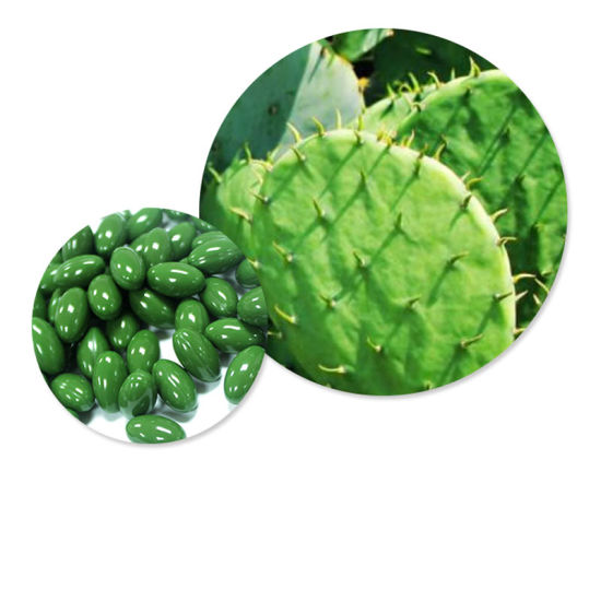 China Oem For Slimming Hoodia Cactus Extract Hoodia Gordonii