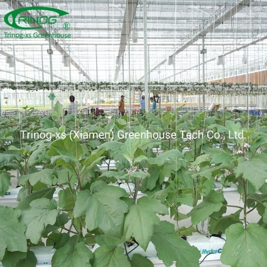 Indoor eggplant hydroponics glass greenhouse for agriculture farm
