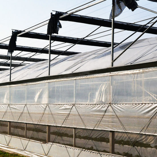 Large Greece Material Plastic Film Multi-Span Greenhouse for Vegetable pictures & photos