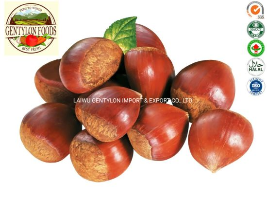 2019 New Season Chinese Fresh Chestnut 30-40 40-50 40-60 60-70 Wholesale Price pictures & photos