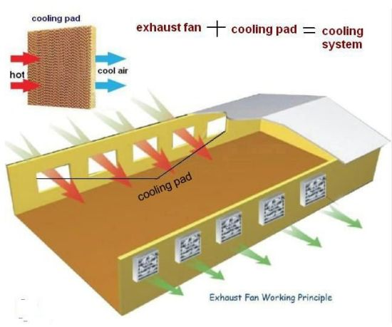 Evaporative Cooling Pad for Air Cooler/Greenhouse pictures & photos