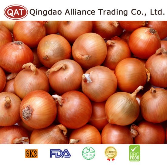 New Crop Chinese Fresh Yellow Onion pictures & photos