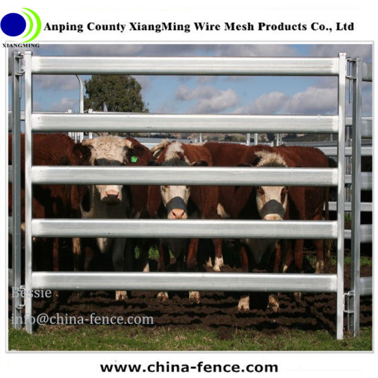Brahman Beef Cattle Cow Livestock In Sale Yard Pens Waiting For Live Export  Stock Footage Video 7439113 | Shutterstock