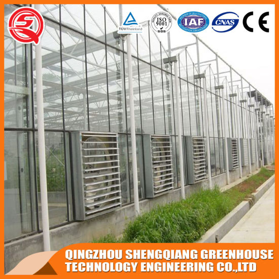 PC Greenhouse Agriculture Productive with Hydroponic System for Planting Tomato/Lettuce/Strawberry/Cucumber/Garden