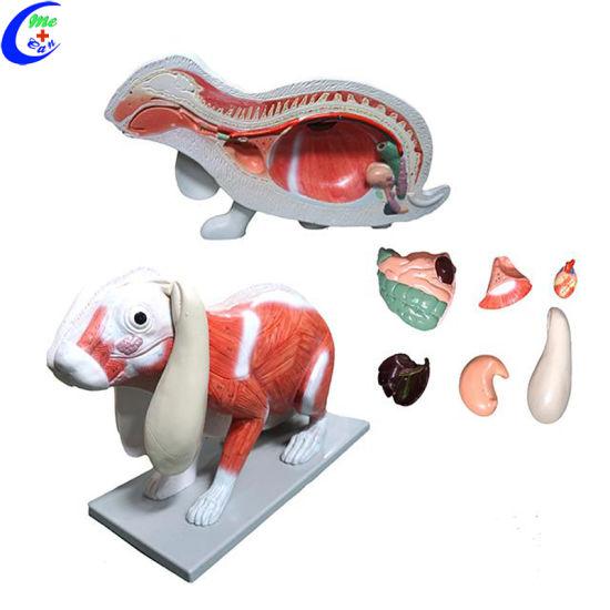 China Realistic Cat Animal Anatomy Model - China Realistic Cat ...