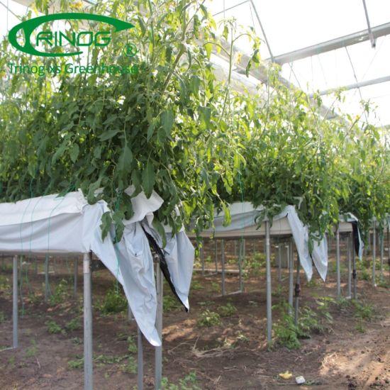 Modern Appearance Multispan Flower Greenhouse tunnel for large farm
