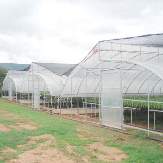 Top Quality China Single Span Polyethylene Film Greenhouse Manufacturer