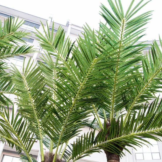 Large Outdoor Artificial Fiberglass Coconut Trees for Landscaping pictures & photos