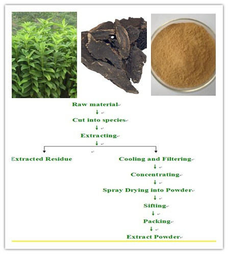 Diosmin Figwort Root Extract, Radix Scrophulariae Extract/Scrophularia Buergeriana pictures & photos