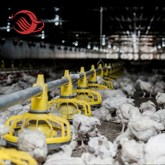 Chicken Farm Automatic Feeder and Drinker