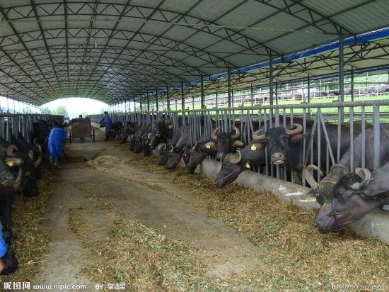 Morden Design Fast Built Construction Steel Building Pig House Cattle Shed Poultry Farm