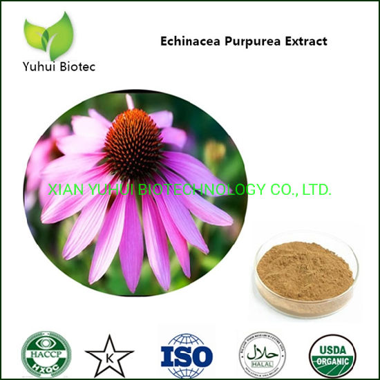 Echinacea Root Extract 4% Cichoric Acid HPLC pictures & photos