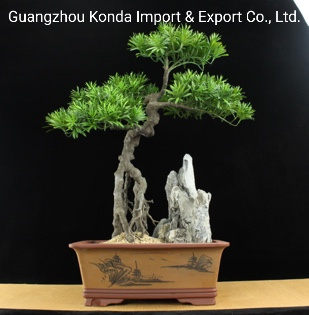 Home Decor Luxury Faux Trees with Custom Logos Artificial Plants